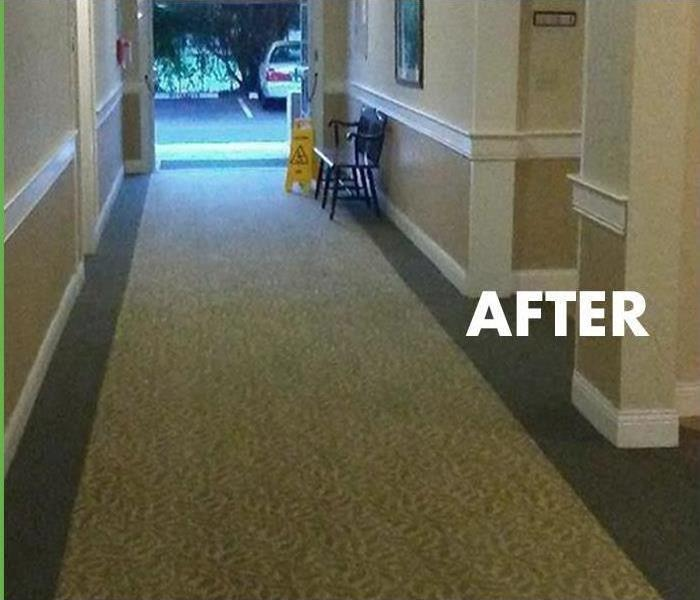 Carpet Cleaning, FL After