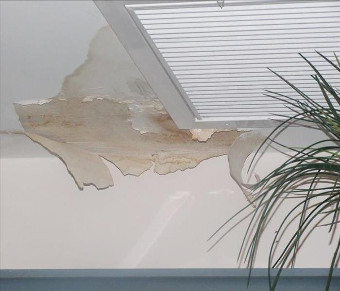 Water Into Mold, FL