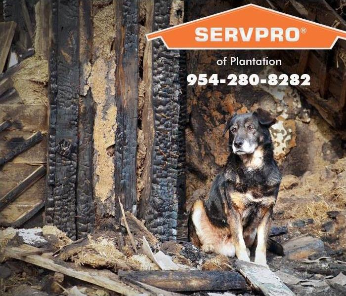 Sad dog sitting in front of a fire damaged home.