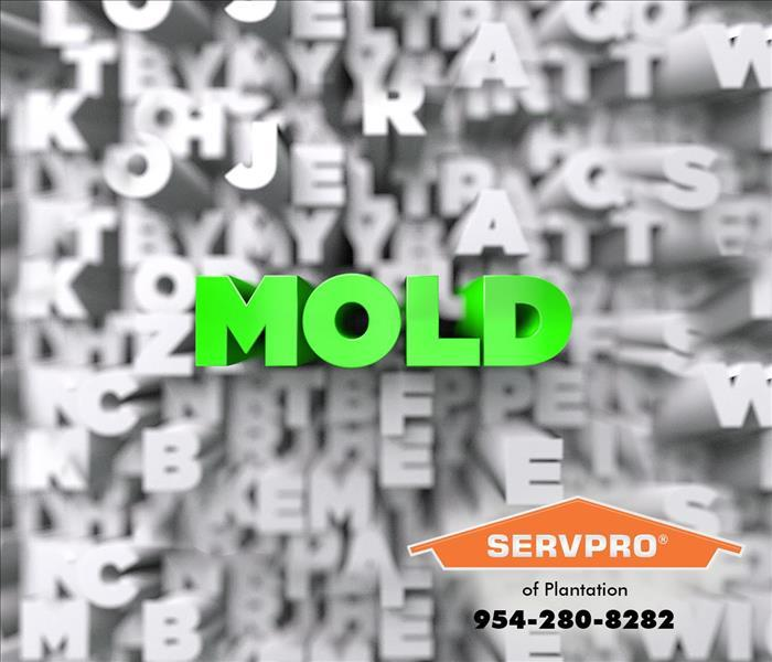 Text image of the word mold zooming out of a chaos of mixed up letters.