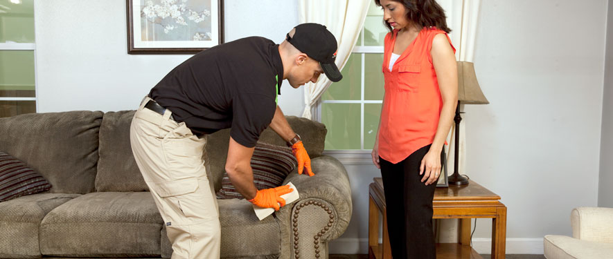 Plantation, FL carpet upholstery cleaning